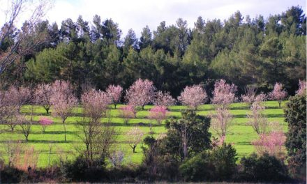 Retours sur la visite du domaine de Mazy, pionnier en agroforesterie fruitière par Chloé Gaspari