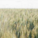 """""""Fuyez aux champs !"""" (Flee to the fields) livre culte du mouvement agraire – Introduction du livre par le professeur Tobias Lanz"""