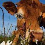 AGRICULTURE – Un pasteur auprès des éleveurs