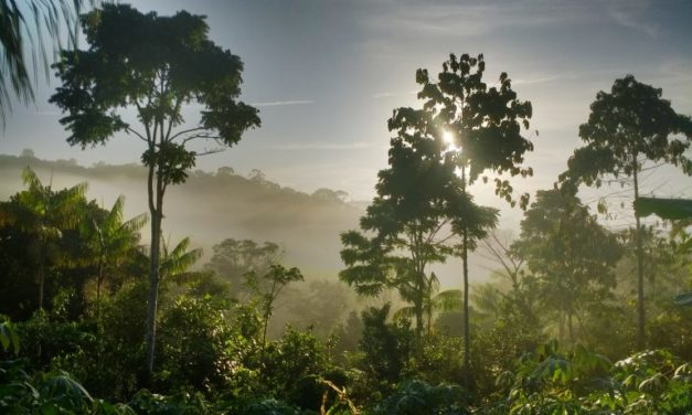 Cultiver de l'eau – Recherche en agroforesterie chez Ernst Götsch à Bahia Publié par Geoffroy Damant le 3 juillet 2018