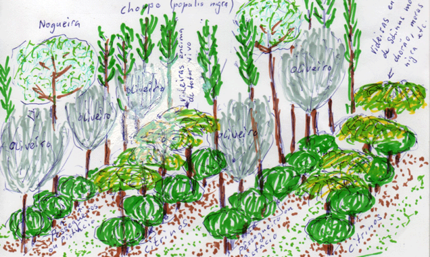 Conception pour la Méditerranée – enrichissement d'une oliveraie – Travaux réalisés dans l'atelier d'Agriculture Syntropique à Herdade do Freixo do Meio, dans la région de l'Alentejo, Portugal, en mars/2018