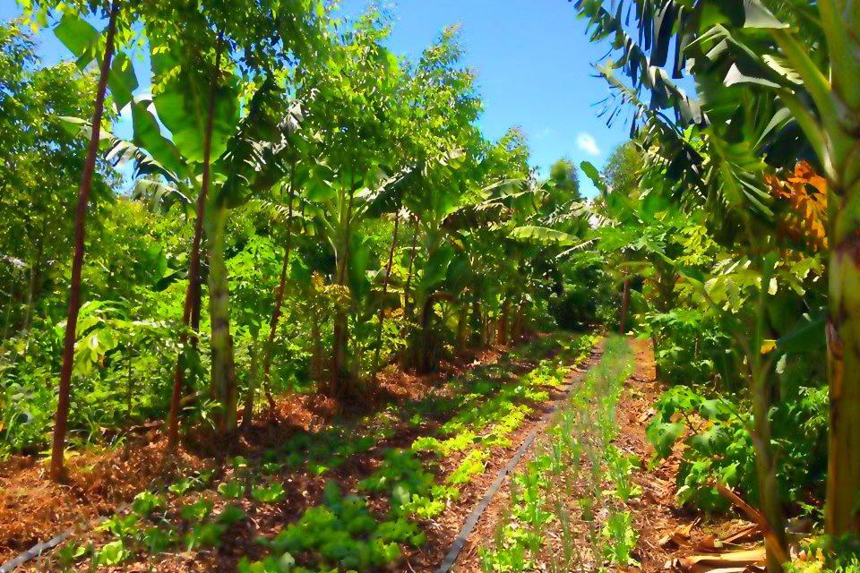Pourquoi faire de l'agroforesterie successionnelle en France? Steven Werner – Interview réalisé par Opaline LYSIAK