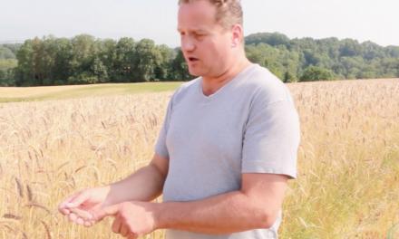 Olivier Mayor – Les blés anciens – RÉALISÉ PAR ELINE MÜLLER ET L'ASSOCIATION PISSENLIT