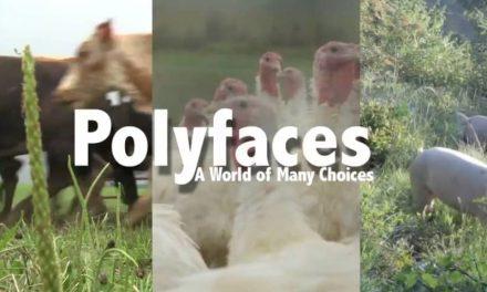 Darren Doherty à MAZY : TRAILER DU FILM POLYFACE