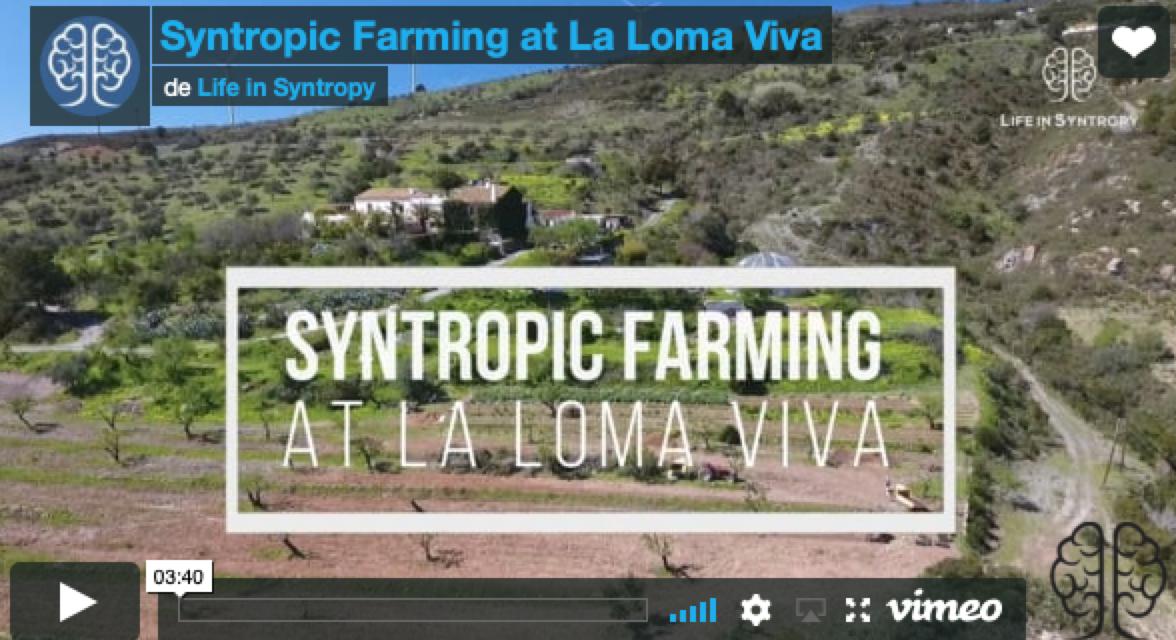 L'agriculture syntropique dans le sud de l'Espagne-  Felipe Pasini