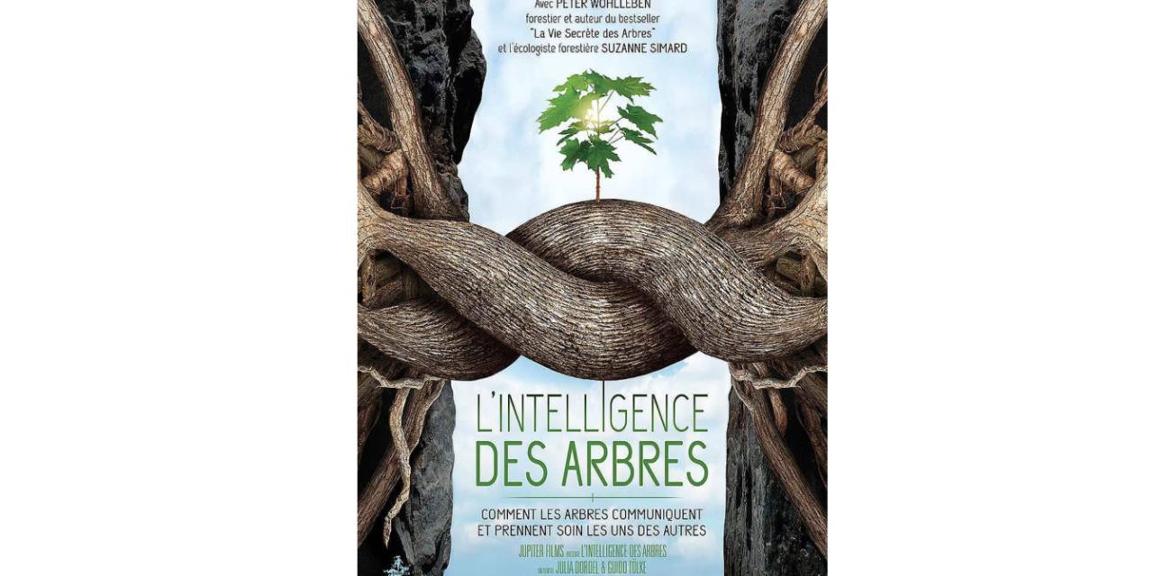 L'intelligence des arbres » : un film qui révèle la vie secrète des forêts – Co-réalisatrice du film, Julia Dordel